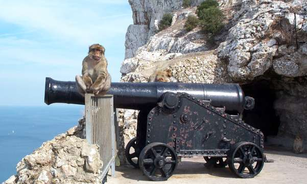 Monkey and cannon